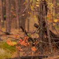 осенний лес :: Ирина Секачева