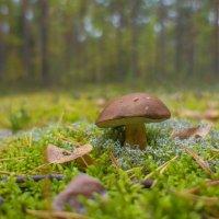 В лесу осеннем... :: Igor Andreev