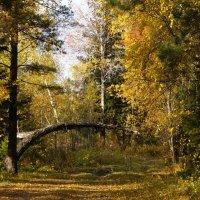 Осень - сказочный чертог :: Галина Кан