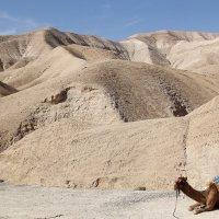 Иорданская пустыня :: Елена Даньшина