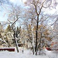 Зимнее утро :: Андрей Снегерёв
