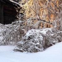 Скользя по утреннему снегу.... :: сергей