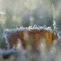 Утренняя изморозь :: Николай Северный