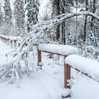 Пушистая зима :: Виктор