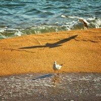 Тень чайки :: arkadii