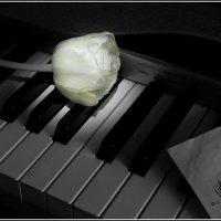 Тихая музыка :: antip49 antipof