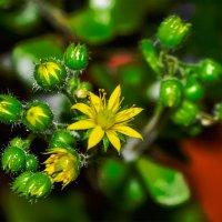 маленькое солнышко :: Гера Dolovova