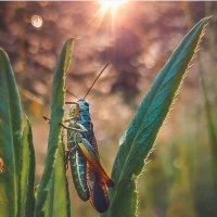В траве сидел кузнечик.. :: Ангелина Бонд
