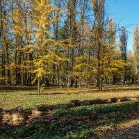 Золотой октябрь :: Юрий Яловенко
