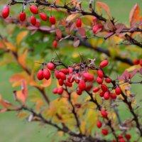 Яркие осени краски :: Мария