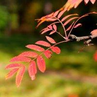 цвет и свет осени :: boris
