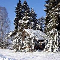 Под снегом по макушку в лесу стоит избушка... :: Алла Кочергина