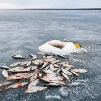 ВЕСНА !  Мартовская рыбалка. :: Юрий Пучков