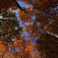 Осень - это последняя, самая яркая улыбка года!!! :: Вадим Якушев