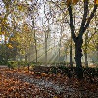 Р=Осень в парке Ретиро :: Yakovbar