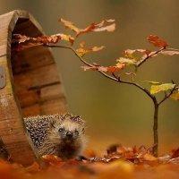 Приятна осень ёжикам :: ИРИШКА КАЗАКОВА