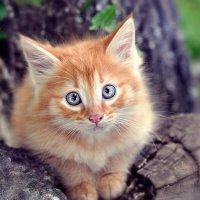 рыжий котенок :: Vladimir Valker