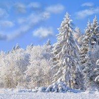Зимний лес :: Табаско Перчик