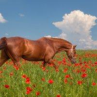 Наступил год лошади... :: Олег Самотохин