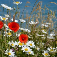 Цветы и Океан :: Uno Bica