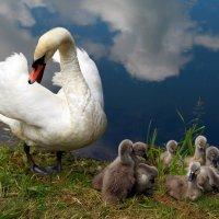 Счастье материнства :: Карпухин Сергей