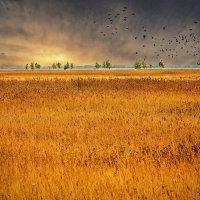 Птицы улетают на юг :: Dima Pavlov