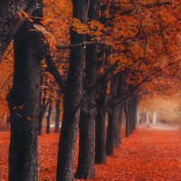 Осенний парк :: Максим (maksimilianis4e)