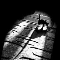 Кошки-мышки... :: Галина Щербина