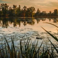 Золотая акварель :: Константин Фролов