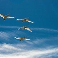 Пролетая над Куршским заливом :: Игорь Вишняков