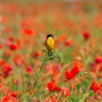 Птичка-невеличка :: Ирина Токарева