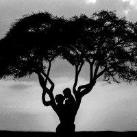 дерево жизни :: Evgeniy (Евгений) Roslov (Рослов)