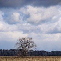 Одиночество... :: Юрий Галаев