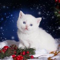 Сказка для котейки :: Елена Волгина