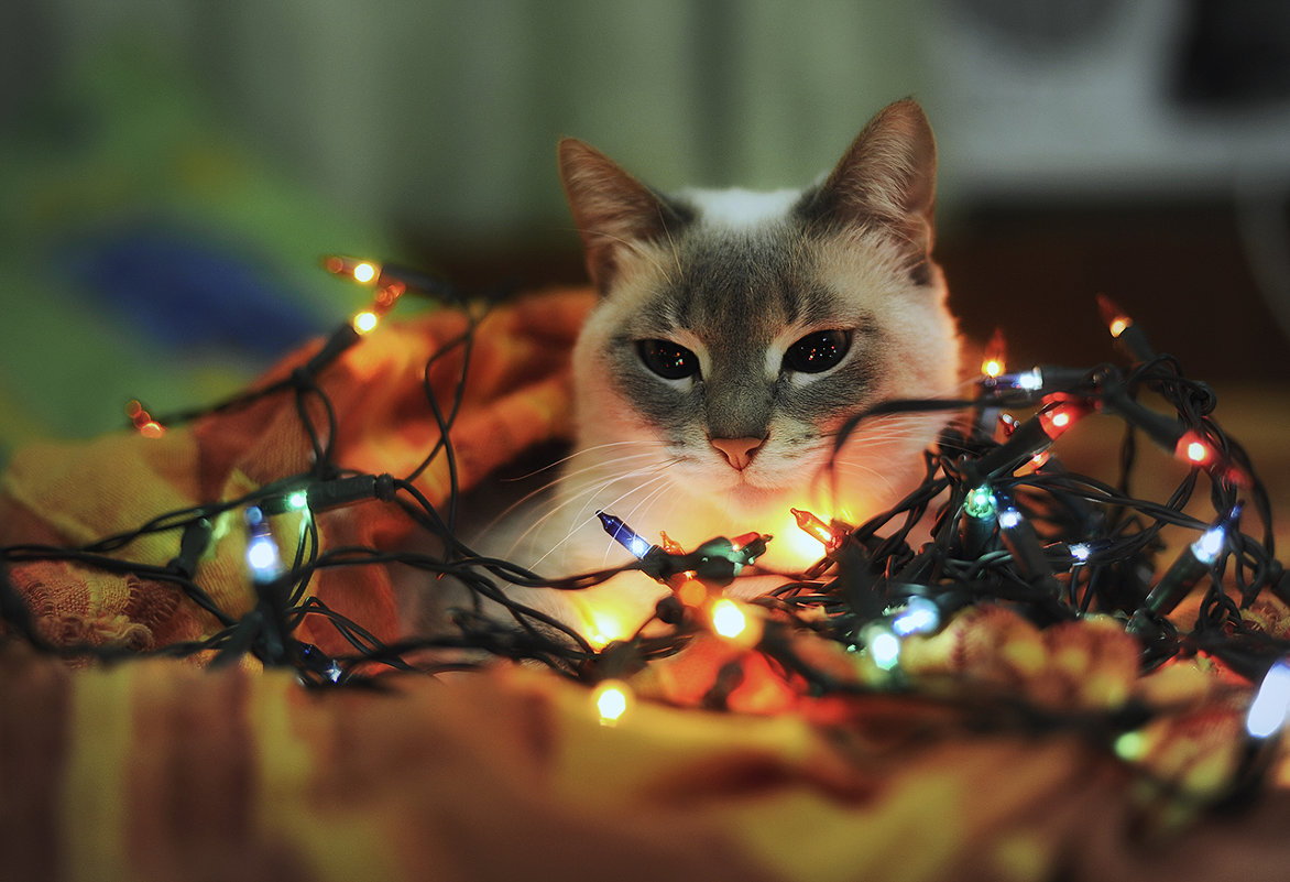 Картинки на новый год с кошками