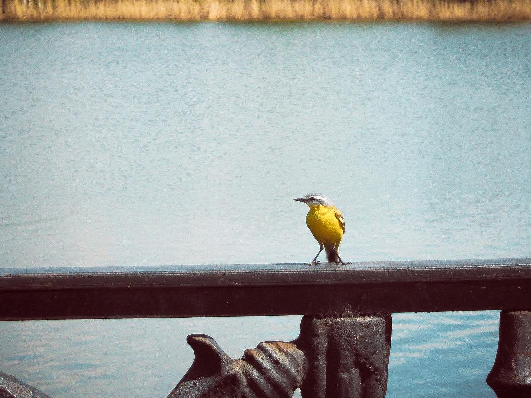 A bird - Marina Erofeeva
