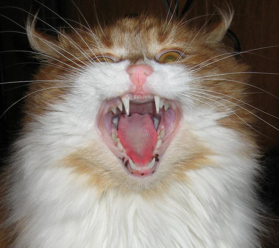 Нет зверя страшнее кошки. - Юрий Кузяков