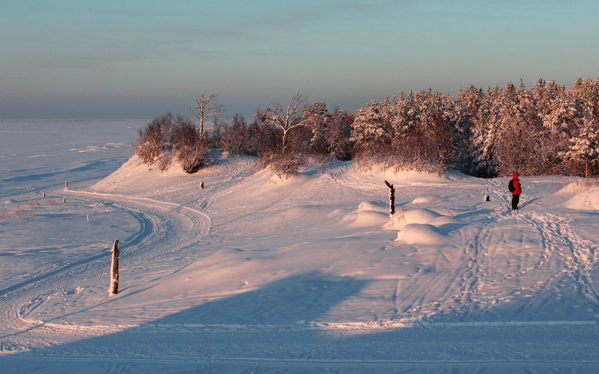 Сосновый бор на берегу Белого моря - Владимир Шибинский