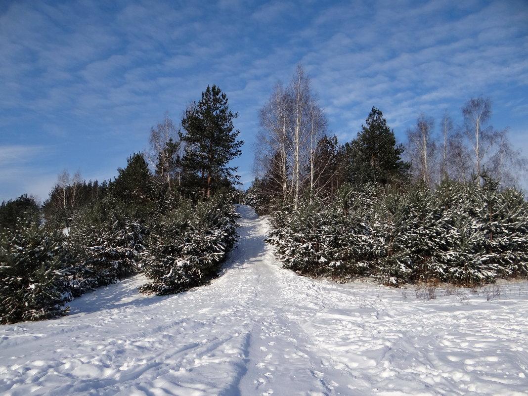 горка в лесу - Дмитрий .