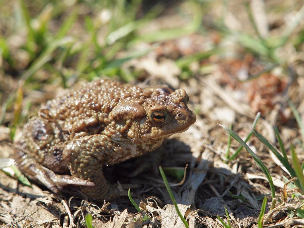 Мудрая жаба. - Андрей Зайцев