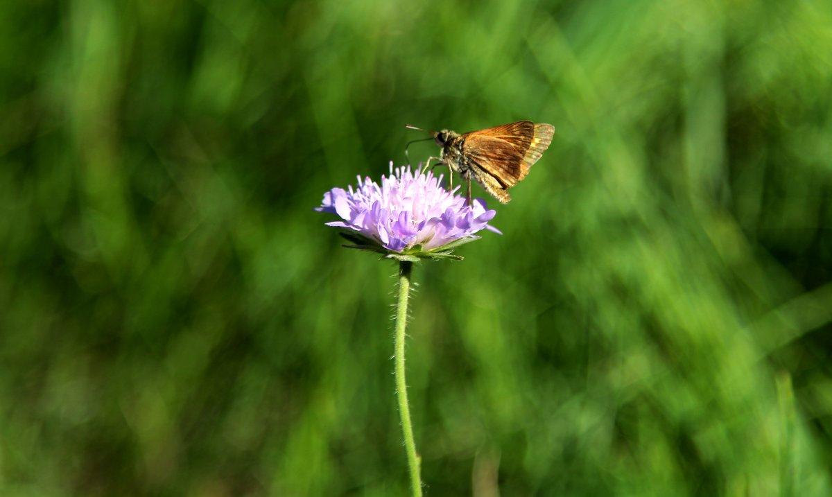 Бабочка - Ирина