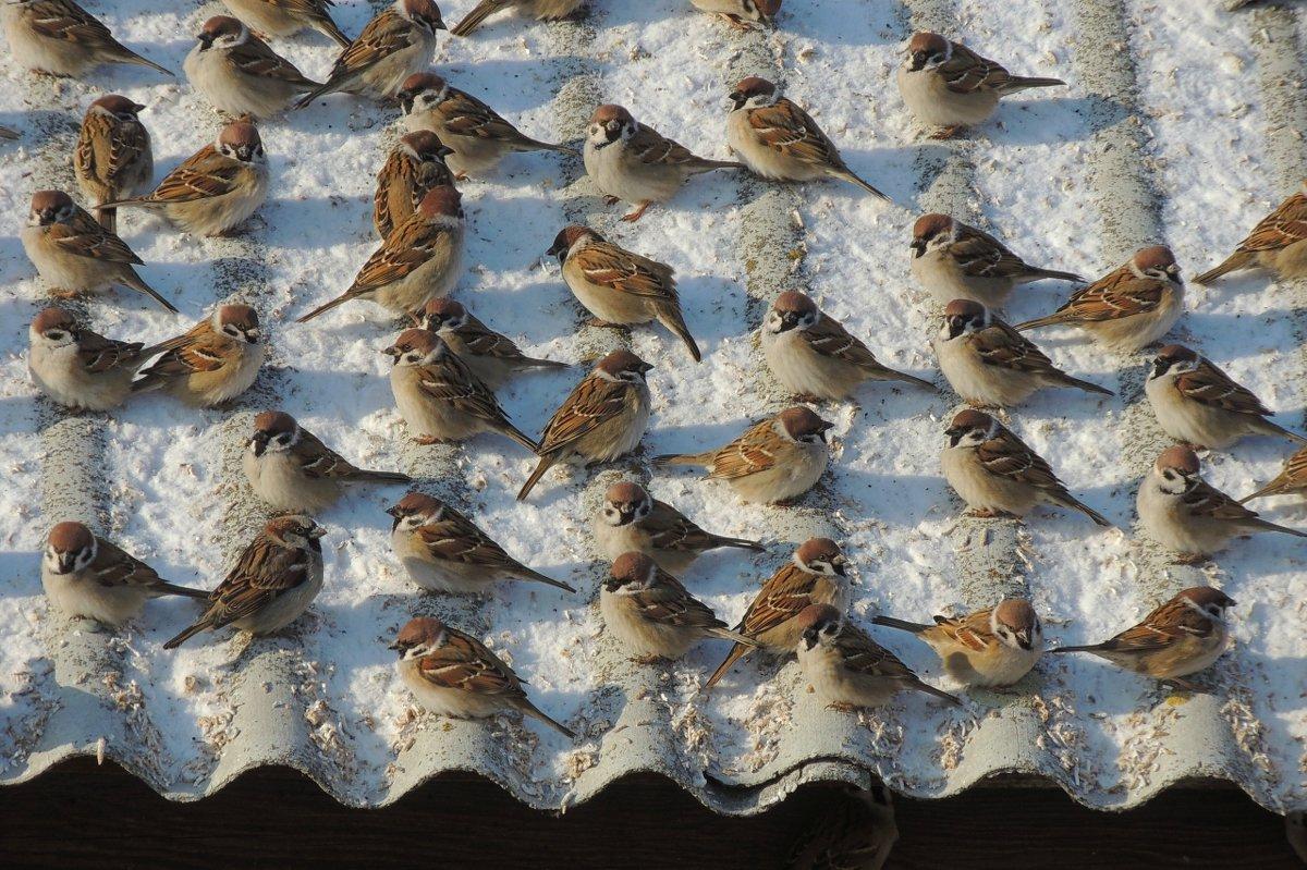 благоверный много птиц собирается на крышах цена квартиры