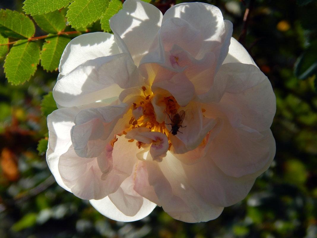 Цветок с мушкой - Виктор Орлов
