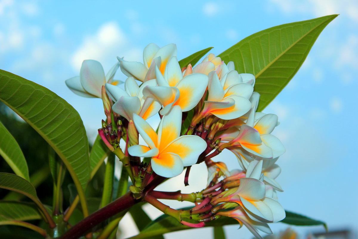 Фото экзотических цветов высокого разрешения