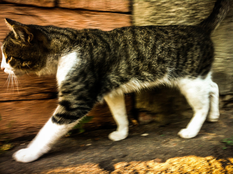 Кот в деревне - Константин Родочинский