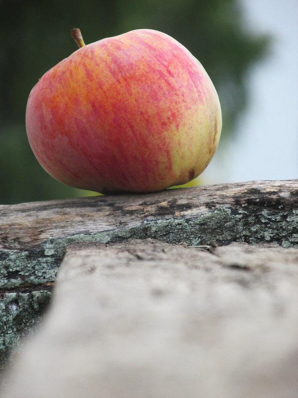 Яблоко. - Emma Smit