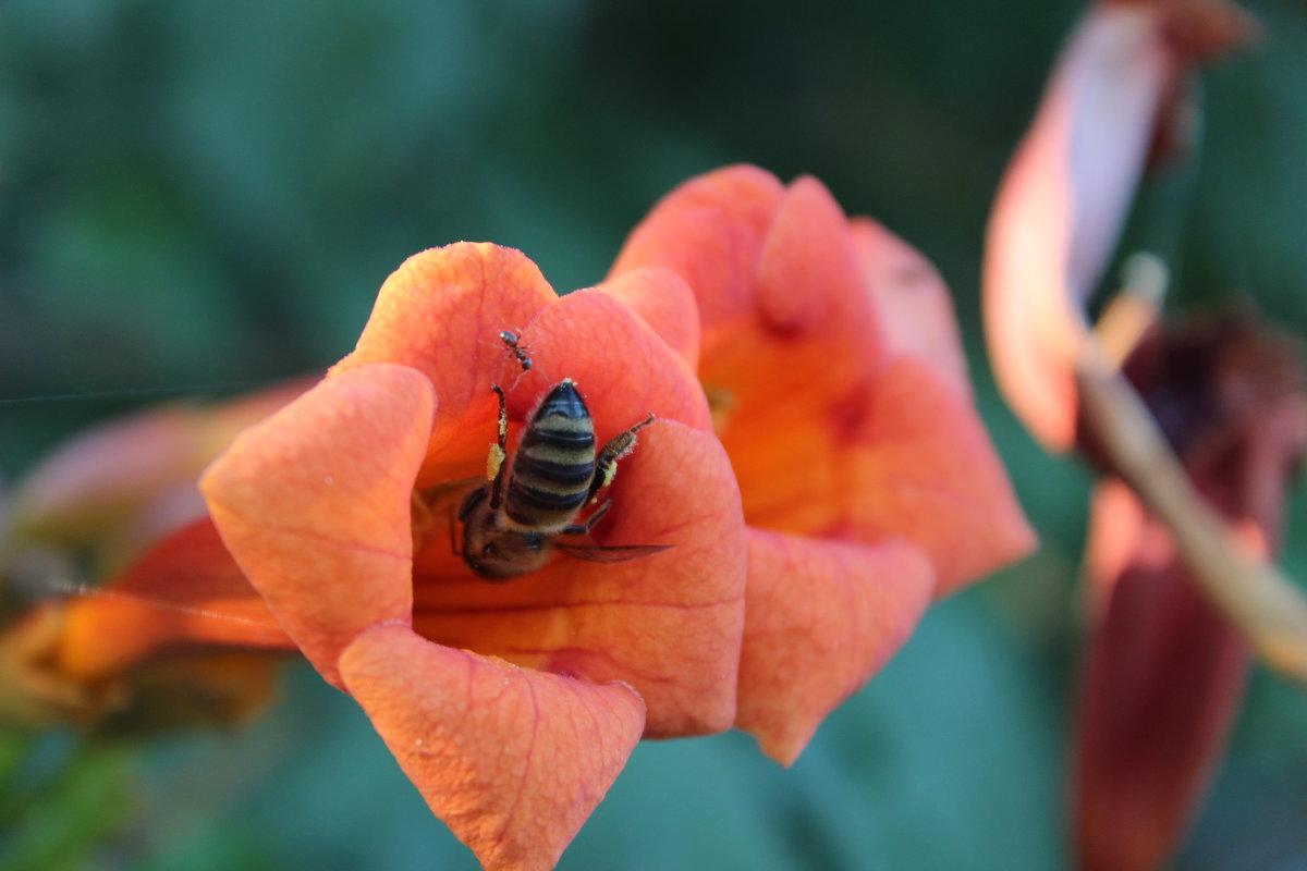 Слышь - пчела! Это мой цветок! - Владимир Собянин