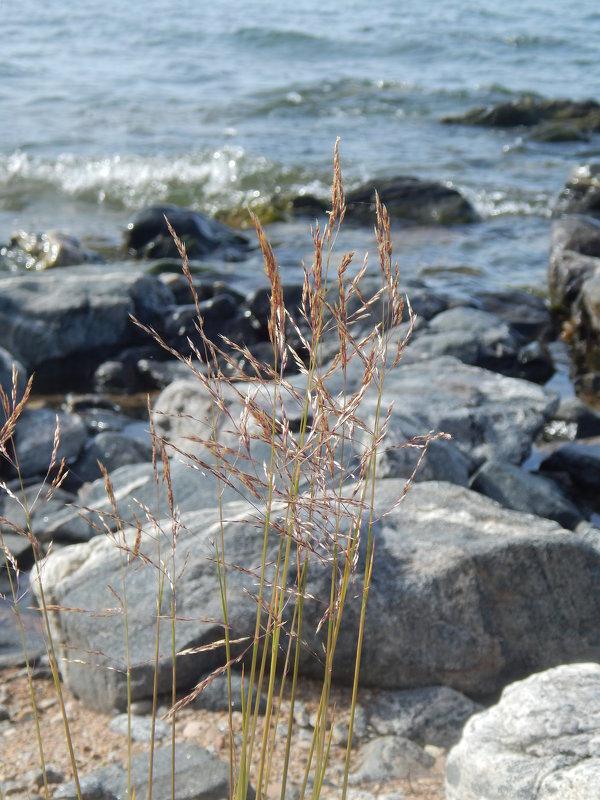 Трава и камень - Елена