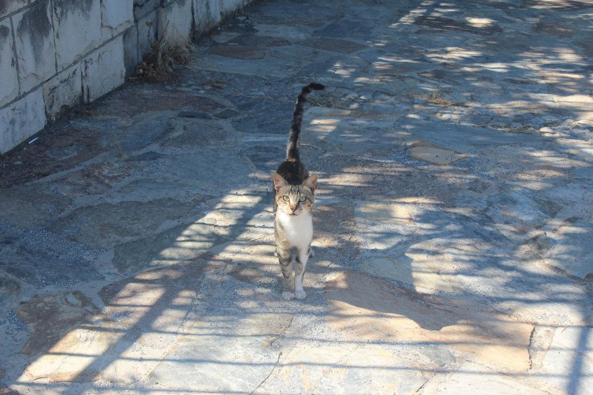 Кошка - Мария Лебедева