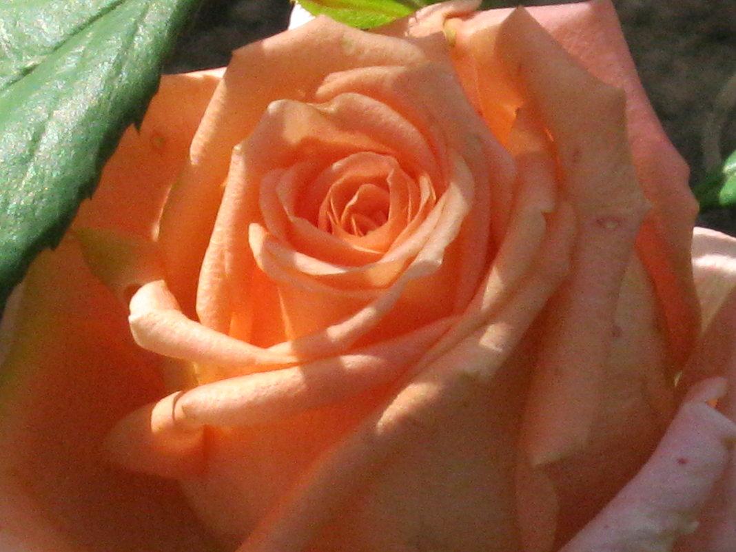 Прощальное цветение - галина